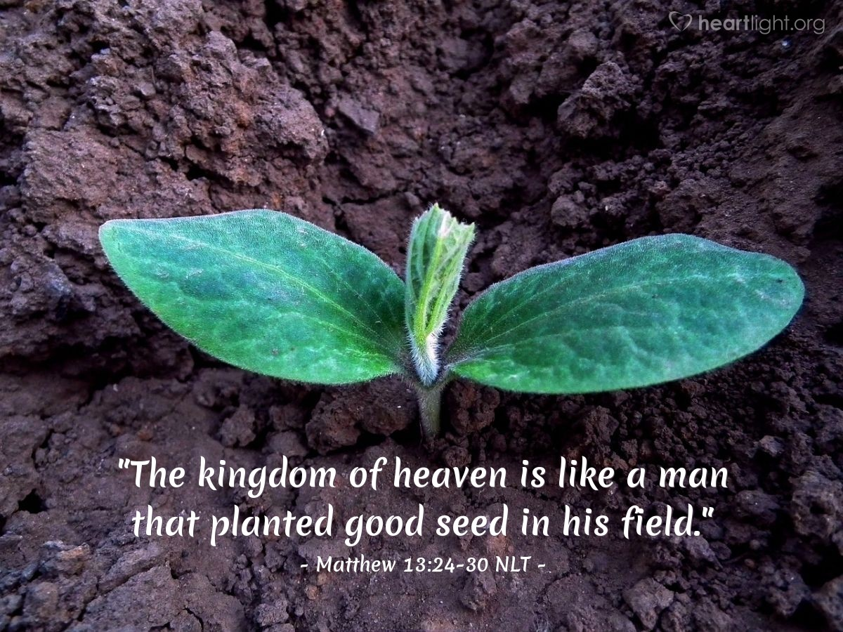 16th Sunday in Ordinary Time – 19 July 2020